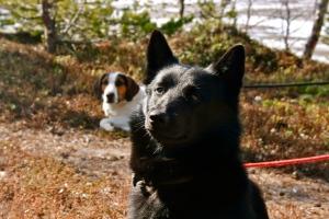 Karo og Varg koser seg på tur