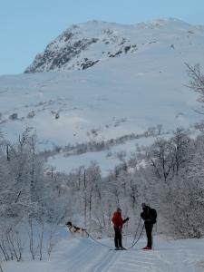 Herlige skispor innover Storlidalen