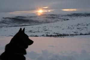 Hund i solnedgang
