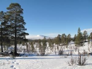 Vinterferie i Femundsmarka - bedre kan det ikke bli.